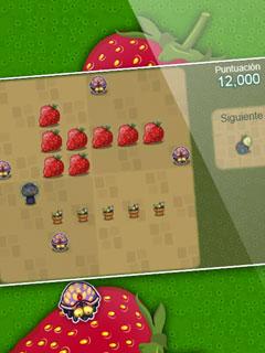 Image Berry Bug